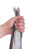 Gar ryba Man& x27; s ręka trzyma ryba, tło Zdjęcia Stock