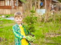 Gar?on tenant une jeune plante d'arbre dans des mains images stock