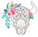 Garabatee el cráneo del toro con las flores y las plumas de la acuarela Imagen de archivo