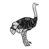Garabato de la avestruz stock de ilustración