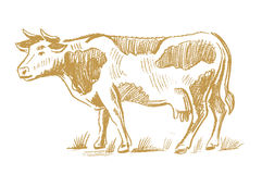 Garabato de la vaca en blanco Imagen de archivo