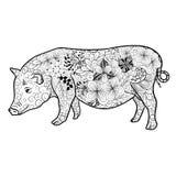 Garabato del cerdo libre illustration
