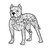 Garabato del perro de Pitbull ilustración del vector