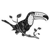 Garabato del tucán stock de ilustración