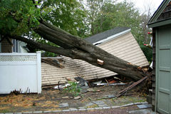 Garage gets crushed by tree during Super Storm Sandy. My neighbors garage has a tree on it after Super Storm Sandy Stock Photos