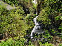 Garajonay National Park Stock Photo