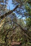Garajonay Natural Nacional Park Royalty Free Stock Photos