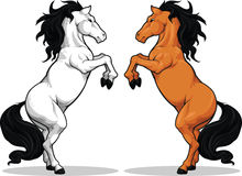 Garanhão ou cavalo empinando Imagens de Stock