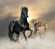 Garanhão preto Fotos de Stock Royalty Free