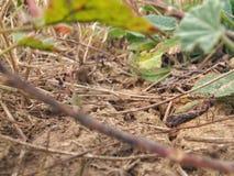 Garasshopper nederlag på jordningen royaltyfria bilder