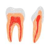 Garatuja dos dentes Imagem de Stock Royalty Free