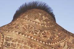 garb wielbłąda Zdjęcia Stock