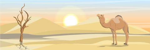Garbaciejący wielbłąd w pustyni z piasek diunami i suszącym drzewem royalty ilustracja