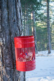 Garbage bin in the woods Royalty Free Stock Images