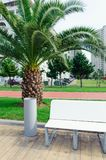 Garbage can and bench in city park with palm trees. Garbage can and bench in the city park with palm trees Stock Photo