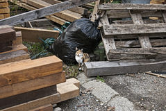 Garbage cat. Cat standing beside garbage and wooden trash Royalty Free Stock Photo