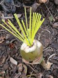 Garbage coconut boquet. Boquet of love from nature and industry stock photo