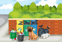 Garbage and dog Stock Images