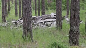 Garbage dump in the forest, environmental pollution, sunny summer day, forest, beautiful green trees. Garbage dump in the forest, environmental pollution, sunny stock video