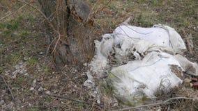 Garbage dump near trees. Environmental pollution. Garbage dump near trees. Environmental pollution stock footage