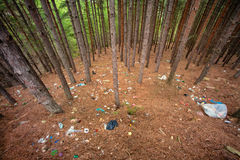 Garbage dump in pine tree forest Royalty Free Stock Photo