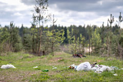 Garbage dump in woods Stock Images