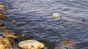 Garbage Floats in the Caspian Sea near the Stones on the Embankment of Baku stock video