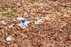 Garbage in the forest Stock Image