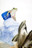Garbage frog Stock Photos