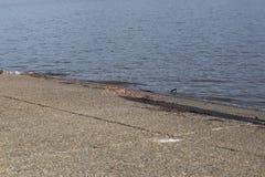 Garbage on a Lake Boat Ramp Royalty Free Stock Image