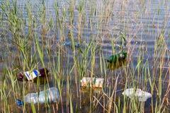 Garbage. In the lake close up Stock Image
