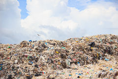 Garbage in landfill Royalty Free Stock Photo