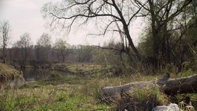 Garbage lying in the forest. Damage to nature from human irresponsibility. Save the nature concept. Steadicam shot stock footage