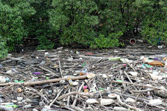 Garbage in Mangrove forest Royalty Free Stock Photos