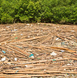Garbage in the Mangrove forest Stock Photos