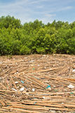 Garbage in the Mangrove forest Royalty Free Stock Photos