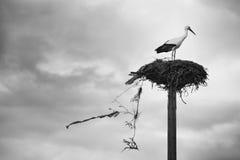 Garbage nest Royalty Free Stock Image