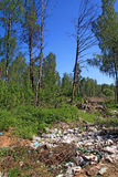 Garbage pit in wood Royalty Free Stock Image