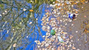 Garbage on the river shore stock video