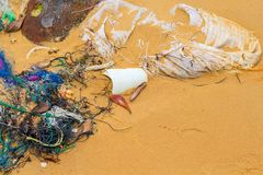 Garbage on sand beach. Trash on seashore. Ecological problem. Plastic in sea. stock images