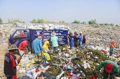 Garbage Scavengers Stock Image