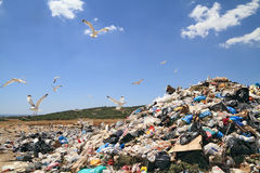 Garbage and seagulls Royalty Free Stock Photography
