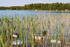 Garbage on shore of the lake Royalty Free Stock Image