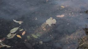 Garbage on a shore of the lake, water pollution.  stock video footage