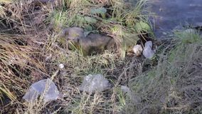Garbage on a shore of the lake, water pollution.  stock video