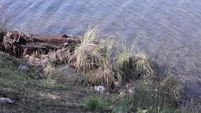 Garbage on a shore of the lake, water pollution.  stock footage