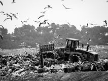 Garbage truck stirring trash at the dump. Contamination concept royalty free stock photo
