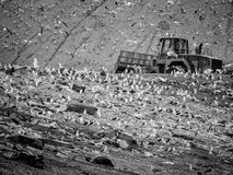 Garbage truck stirring trash at the dump. Contamination concept stock photos
