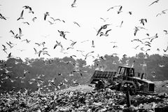 Garbage truck stirring trash at the dump. Contamination concept Stock Image