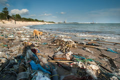 Garbage and wastes on the beach Royalty Free Stock Images
